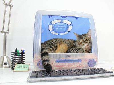apple-cat-bed